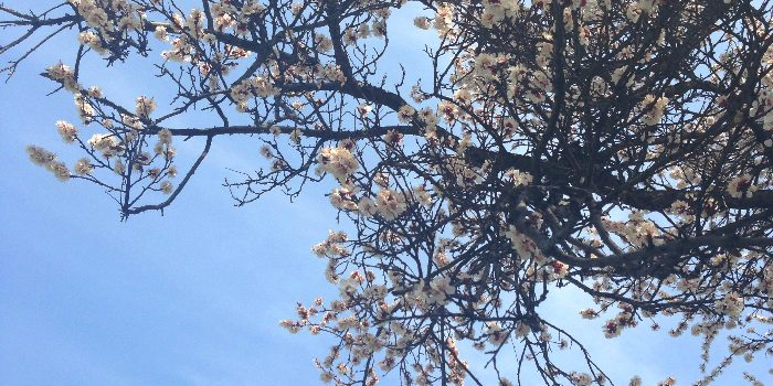 Come spring